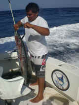 wahoo season-cancun fishing trips