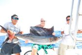 sailfishing cancun and riviera maya