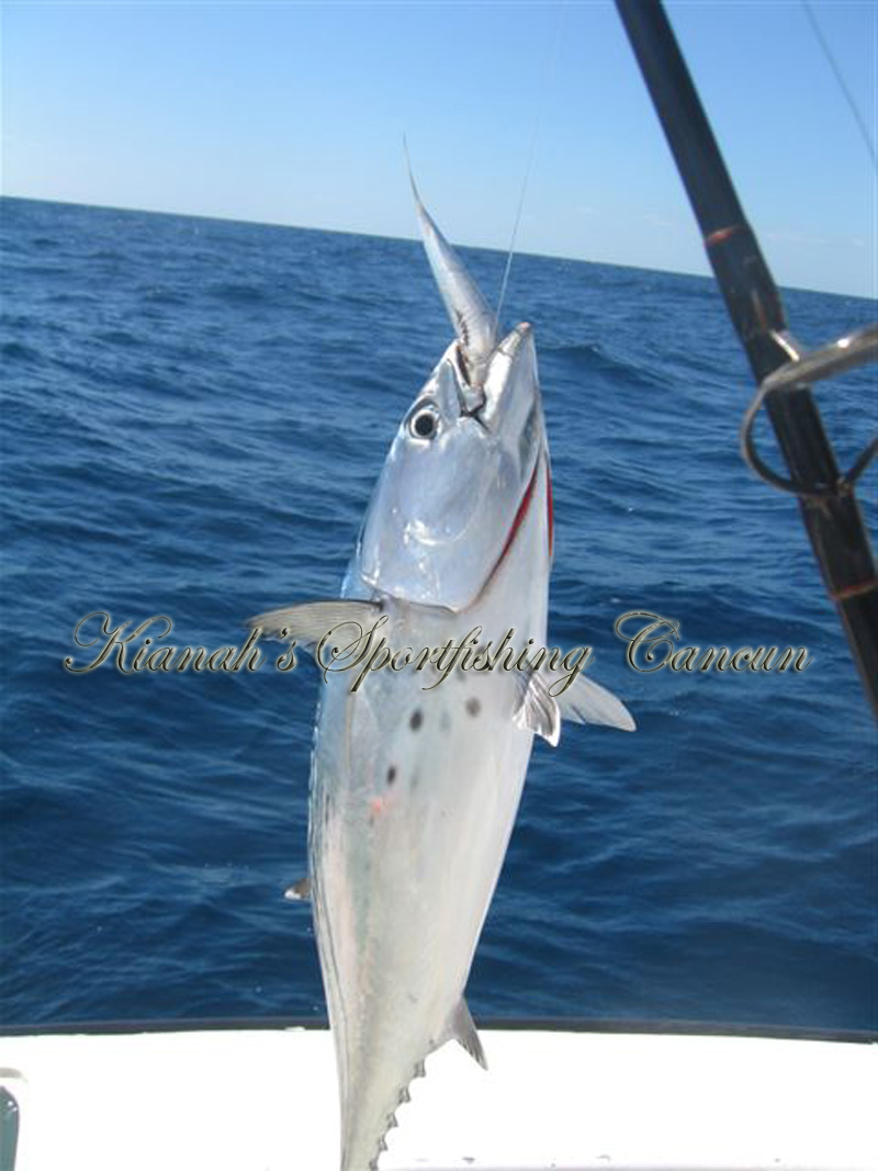 Sportfishing in cancun mexico fishing charter in cancun for Deep sea fishing cancun
