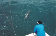 sailfishing isla mujeres | cancun and riviera maya fishing