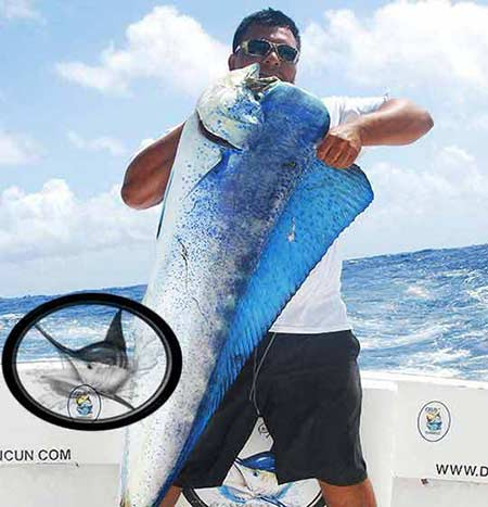 Isla Mujeres fishing charters-fishing season Cancun