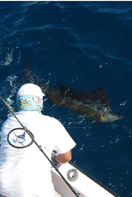 Best marlin fishing in isla mujeres