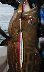 H4L jig, vertical jigging grouper cancun