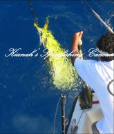 cancun fishing season-mahi mahi fishing charter cancun