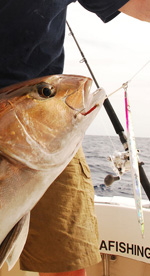Cancun amberjack fishing- fishing trips cancun