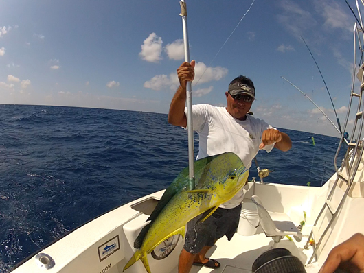 riviera maya sportfishing deep sea fishing riviera maya