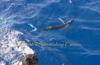 fishing white marlin mexico