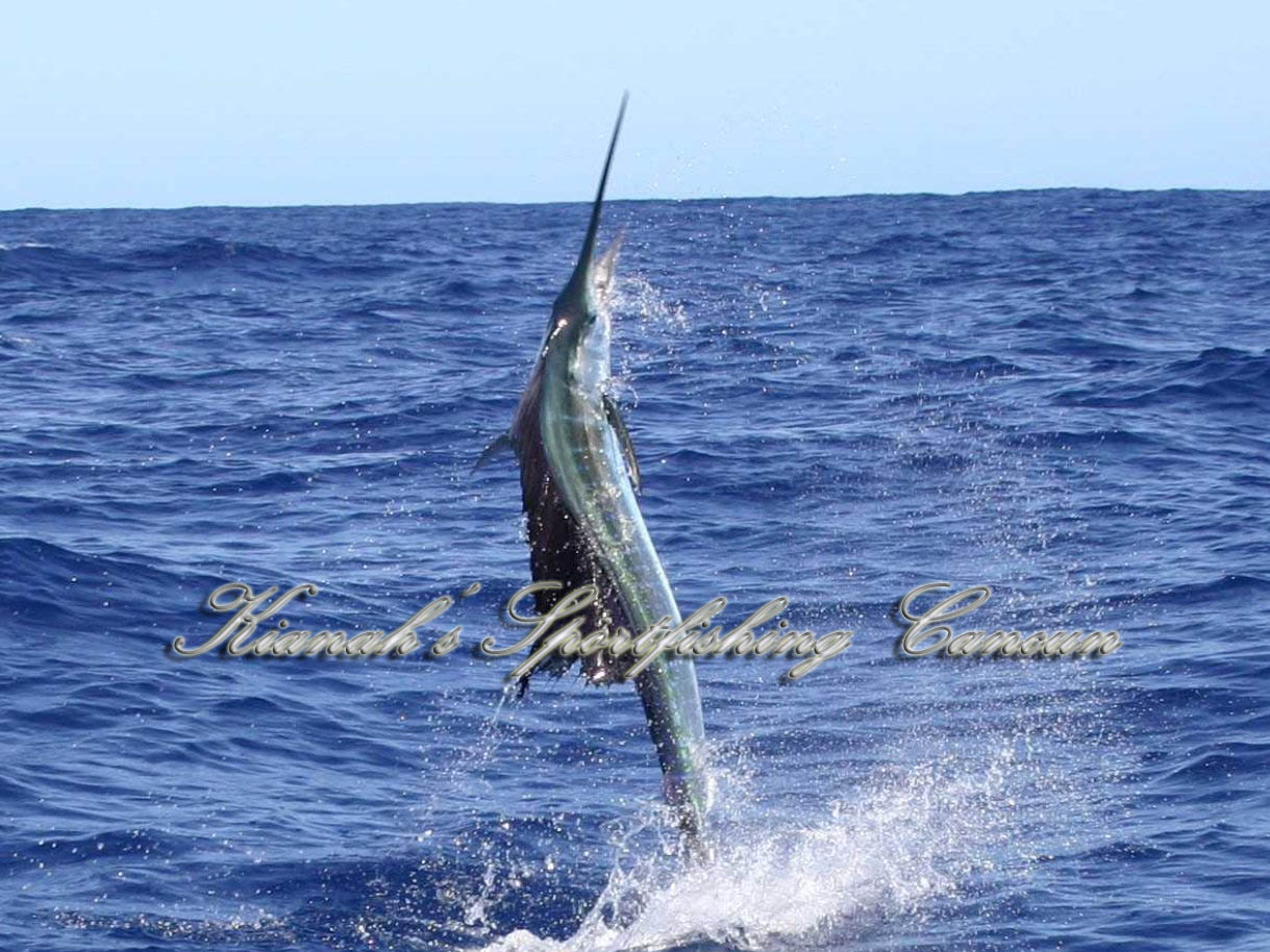 Cancun fishing reservation kianah grand slam isla for Deep sea fishing mexico
