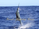 cancun fishing reservations