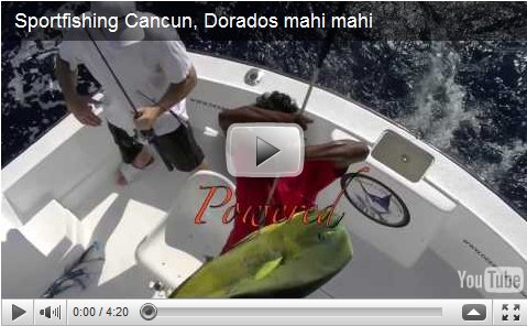 dorado fishing cancun